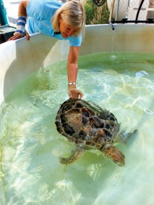 Jennie Gilbert tickling one of her turtle patients