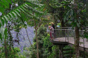 mamu rainforest walkway
