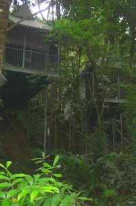 daintree rainforest treehouses