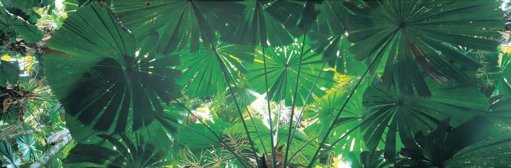 daintree rainforest getaways