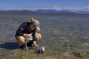 seagrass research on green island
