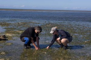 green island seagrass beds