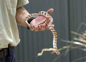 picture of snake handler