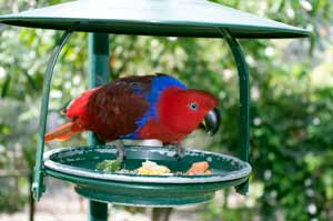 photo of red lorikeet