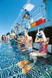 snorkeling the great barrier reef on a cairns reef tour