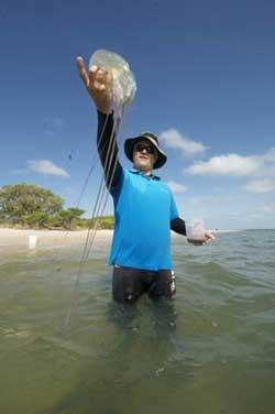 Australian Box Jellyfish: 15 Fascinating Facts