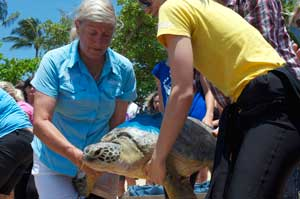 cairns sea turtles being released