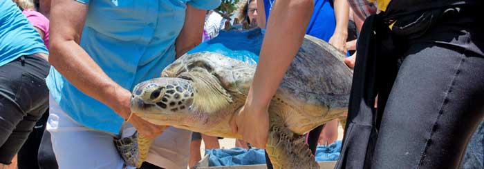 picture of sea turtle release