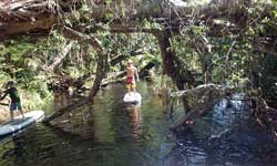 picture of daintree paddle boarding tour on mossman river
