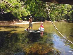 rainforest paddle boarding tour port douglas