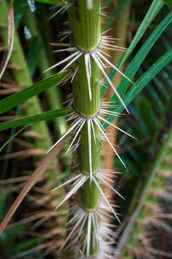 Dangerous Tropical Rainforest Plants In Australia