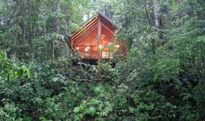 canopy rainforest treehouses, fnq
