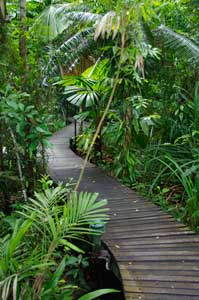 boardwalk daintree wilderness lodge