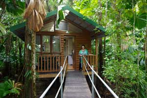 daintree rainforest treehouse