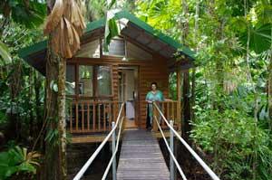 daintree rainforest treehouse