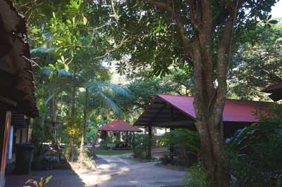 pks village cape tribulation