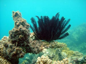 picture of feather star