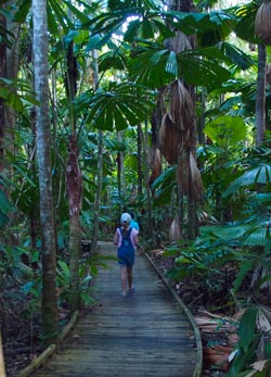 How to get to cape tribulation