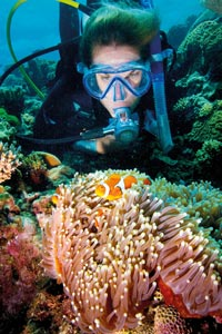 picture of coral and clownfish
