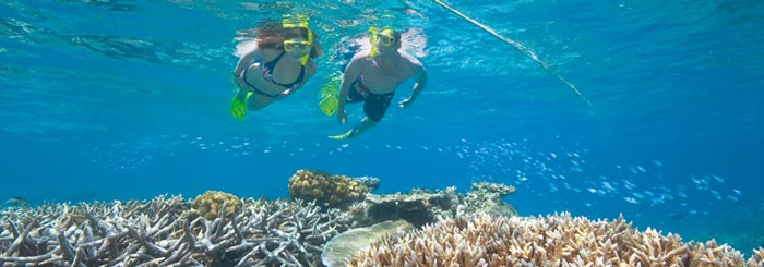picture of snorkeling the great barrier reef