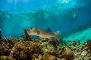 picture of great barrier reef fish