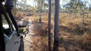 jabiru safari tour