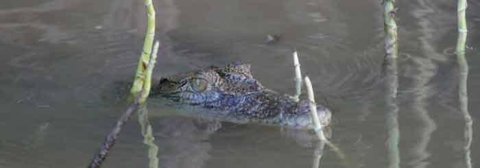solar whisper crocodile cruise daintree