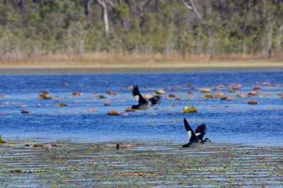 wetlands bird watching