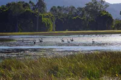 mareeba wetlands easy bird watching fnq