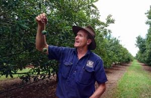 macadamia farm queensland