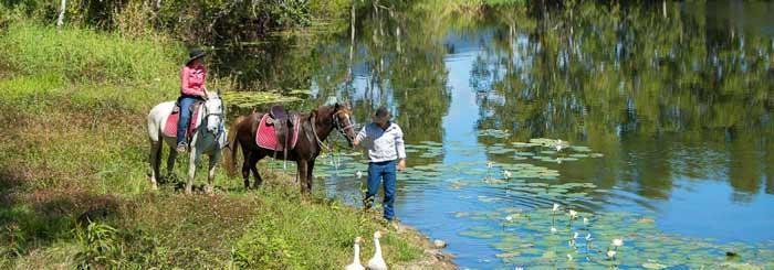 blazing saddles horse riding cairns