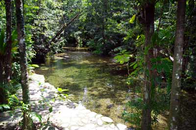 cooper creek daintree