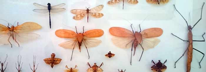 daintree bug museum