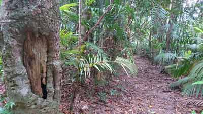kuranda rainforest guided tour