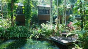 daintree lodge