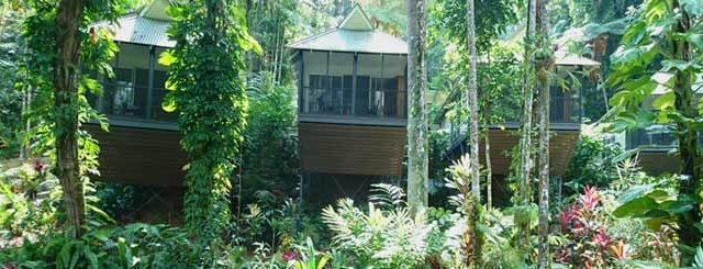 daintree eco lodge