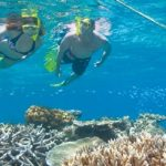 great barrier reef snorkeling trips