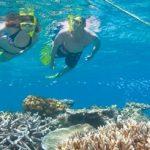 great barrier reef snorkeling trips