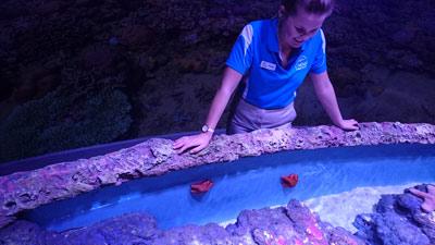 aquarium cairns