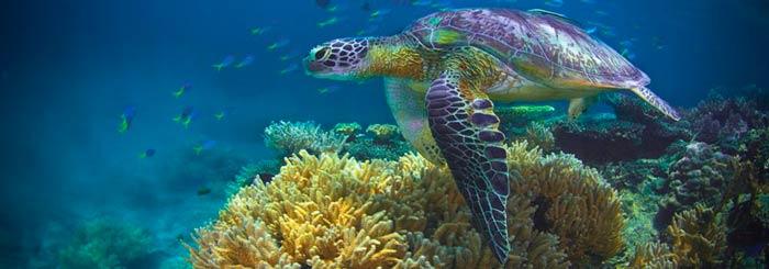 Fitzroy island sea turtles