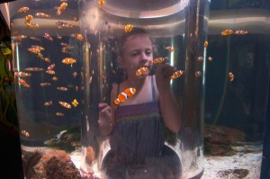 clownfish at reef hq townsville