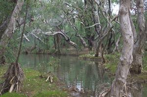 chillagoe creek