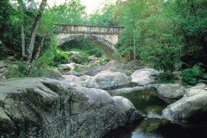 bridge at paluma range national park