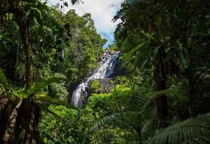 picture of mungalli falls, cairns tablelands