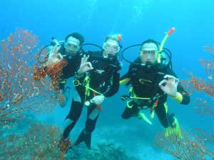 picture of scuba divers on great barrier reef