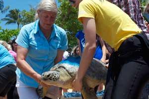 cairns sea turtles being released