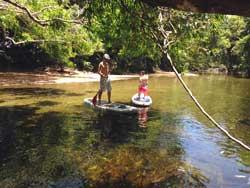 rainforest paddle boarding tour port douglas