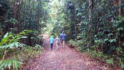 tarzali rainforest walks