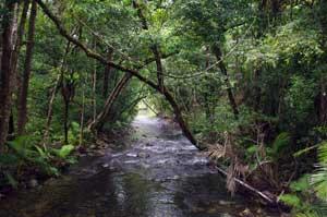 daintree rainforest creek