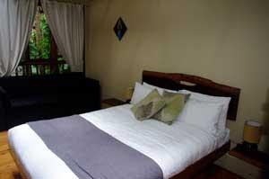 daintree rainforest treehouse accommodation